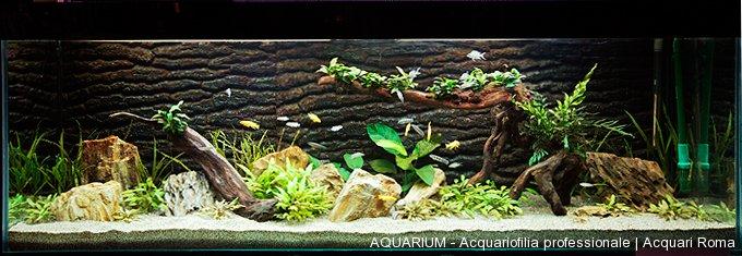 Realizzazione di acquari su misura roma aquarium for Acquario tartarughe vendita online