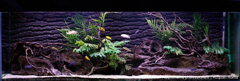 Realizzazione di acquari su misura roma aquarium for Termoriscaldatore per tartarughe
