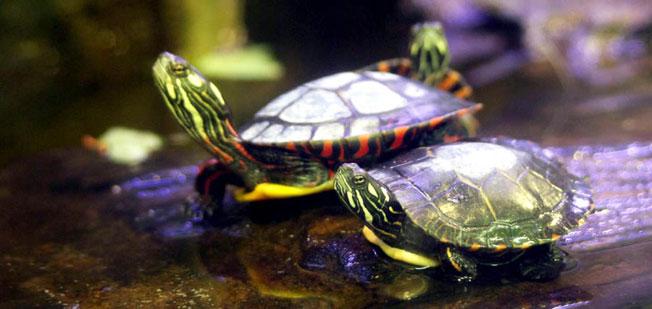 pensione per tartarughe e pesci