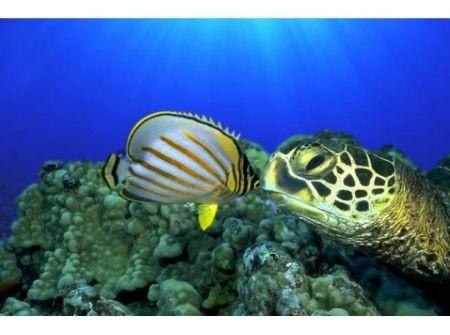 pesci-tartarughe