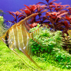 Aquarium Roma