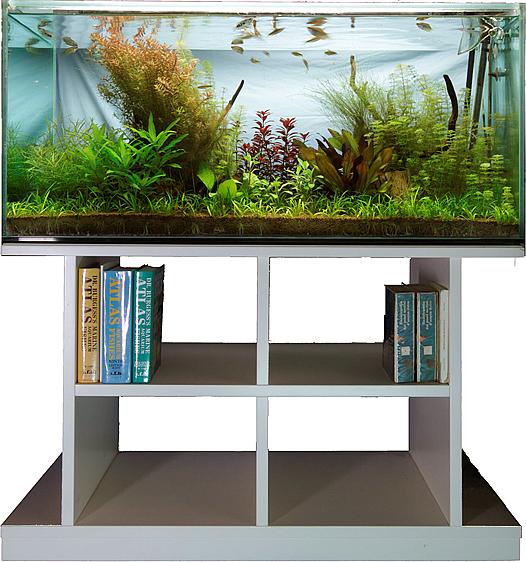 acquario su misura aquarium acquariofilia