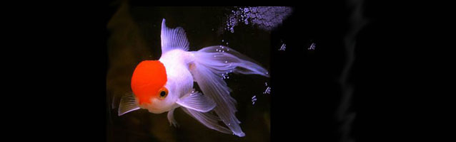 arrivo-pesci